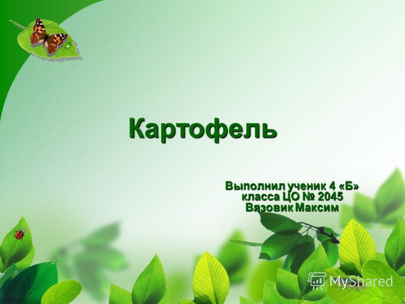 Картофель Выполнил ученик 4 «Б» класса ЦО 2045 Вязовик Максим