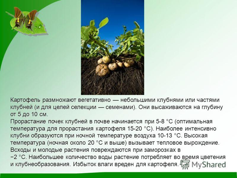 Картофель размножают вегетативно небольшими клубнями или частями клубней (и для целей селекции семенами). Они высаживаются на глубину от 5 до 10 см. Прорастание почек клубней в почве начинается при 5-8 °C (оптимальная температура для прорастания карт