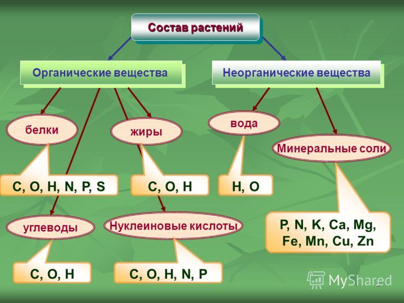 2 Состав растений Органические вещества Неорганические вещества белки жиры углеводы Нуклеиновые кислоты H, O P, N, K, Ca, Mg, Fe, Mn, Cu, Zn C, O, H, N, P, S C, O, H C, O, H, N, P Минеральные соли вода