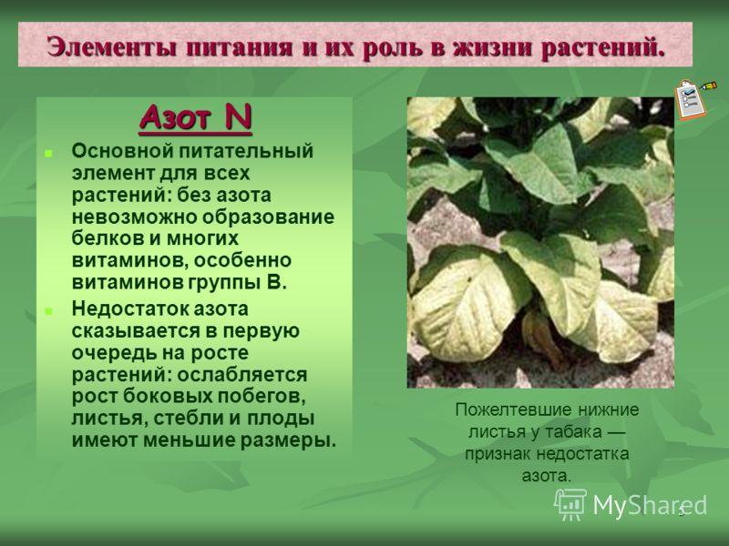 5 Элементы питания и их роль в жизни растений. Азот N Основной питательный элемент для всех растений: без азота невозможно образование белков и многих витаминов, особенно витаминов группы В. Недостаток азота сказывается в первую очередь на росте раст