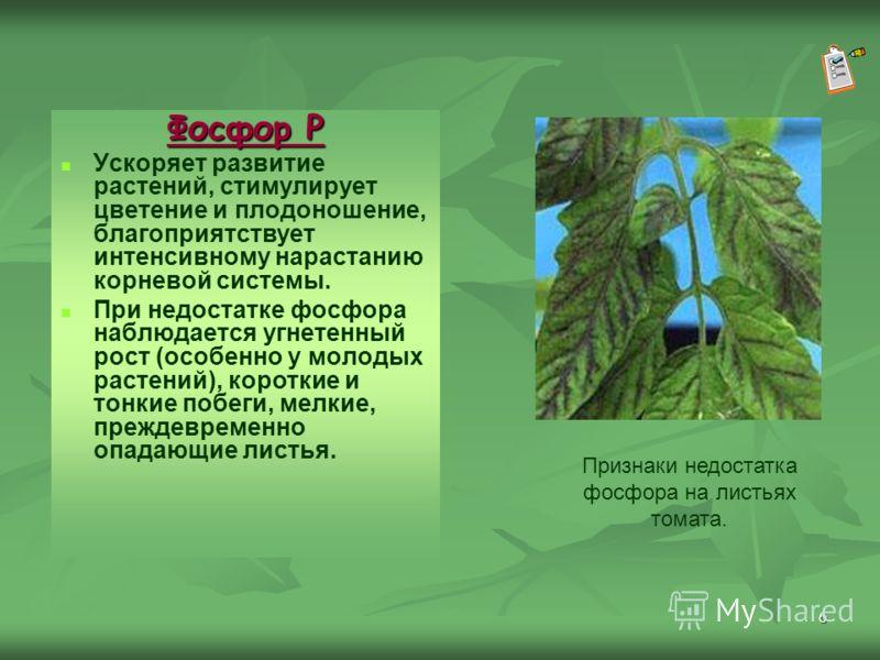 6 Фосфор Р Ускоряет развитие растений, стимулирует цветение и плодоношение, благоприятствует интенсивному нарастанию корневой системы. При недостатке фосфора наблюдается угнетенный рост (особенно у молодых растений), короткие и тонкие побеги, мелкие,