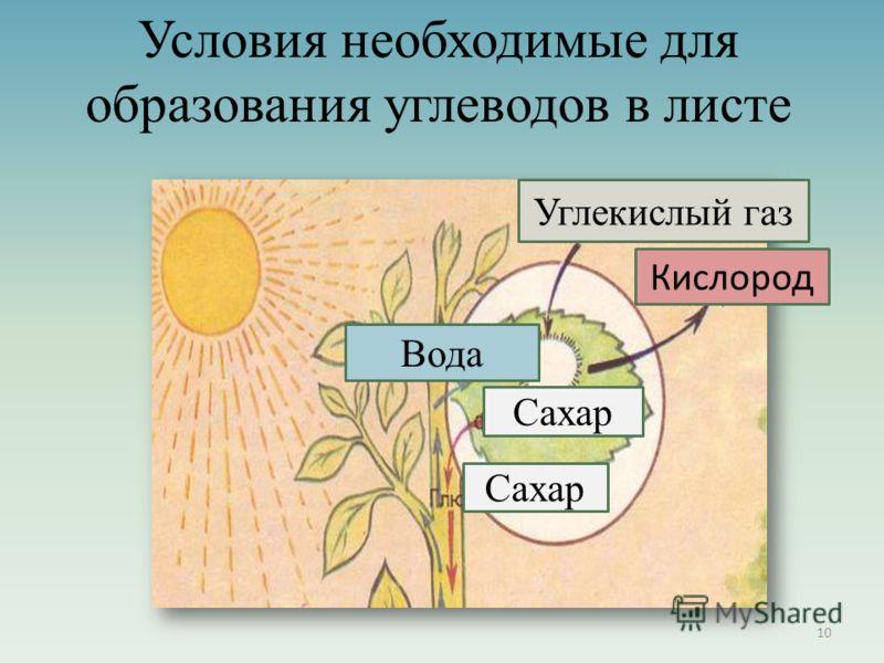 Углекислый газ Кислород Вода Сахар 10 Условия необходимые для образования углеводов в листе