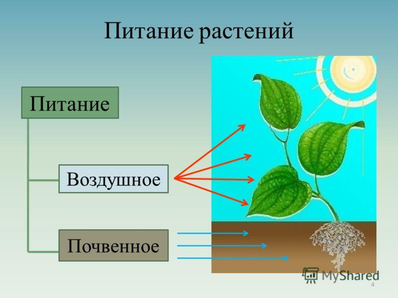 Питание растений Питание Воздушное Почвенное Питание Воздушное Почвенное 4