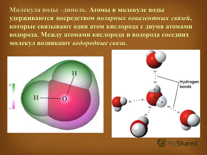 Молекула воды – диполь. Атомы в молекуле воды удерживаются посредством полярных ковалентных связей, которые связывают один атом кислорода с двумя атомами водорода. Между атомами кислорода и водорода соседних молекул возникают водородные связи.