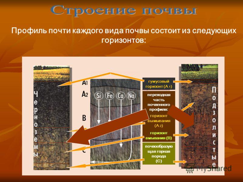 Профиль почти каждого вида почвы состоит из следующих горизонтов: гумусовый горизонт (А 1 ) переходная часть почвенного профиля: почвообразую щая горная порода (С) горизонт вымывания (А 2 ) горизонт вмывания (В)