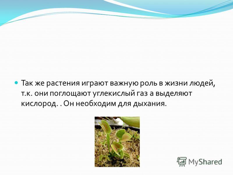 Так же растения играют важную роль в жизни людей, т. к. они поглощают углекислый газ а выделяют кислород.. Он необходим для дыхания.