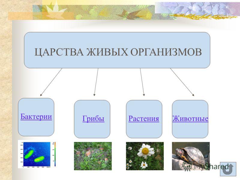 Биология - это наука, изучающая живые организмы. Организм - это живое существо, способное к самостоятельному существованию. Запишите!