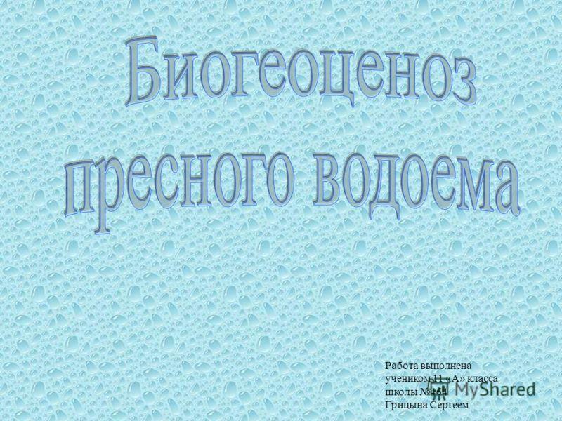 Работа выполнена учеником 11 «А» класса школы 464 Грицына Сергеем