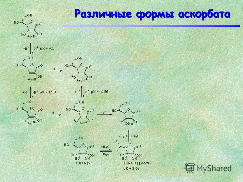 Аскорбиновая кислота Отрыв одного электрона от аскорбиновой кислоты приводит к образованию семидегидроаскорбата, О О ОНОН СНОН СН 2 ОН е е е е е е е е О О ОО СНОН который в результате дальнейшего окисления переходит в дегидроаскорбат. еееееее е О О О