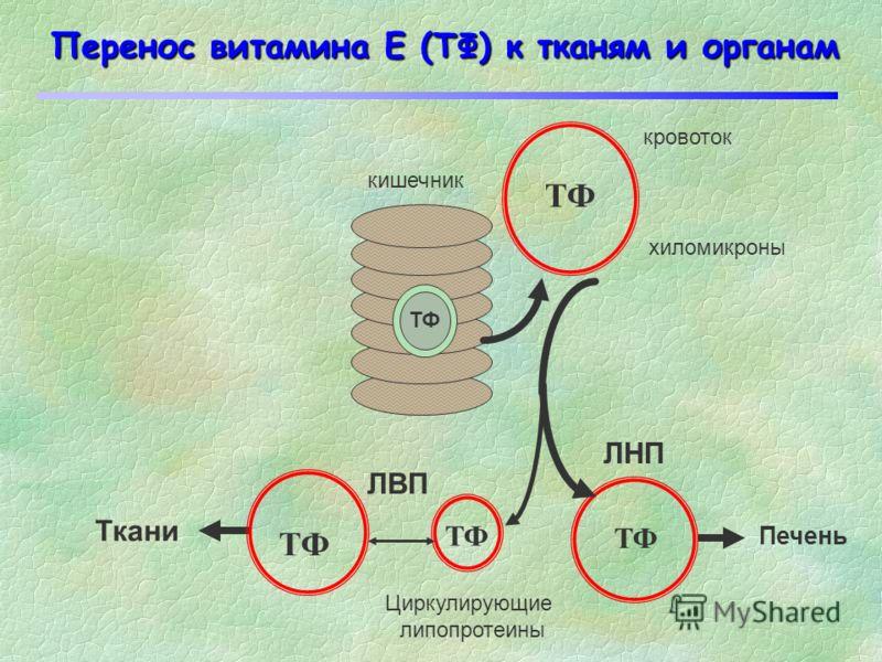 Антиоксидантная роль витамина Е ПОЛ LOOH LHLH LOO Перекисный радикал Инициирование цепи Продолжение цепи Обрыв цепи O2O2 С-центрированный радикал инициатор L T-O T-OH ПОЛ LOOH Гидроперекись липида Ненасыщенный липид Гидроперекись липида Ингибирование
