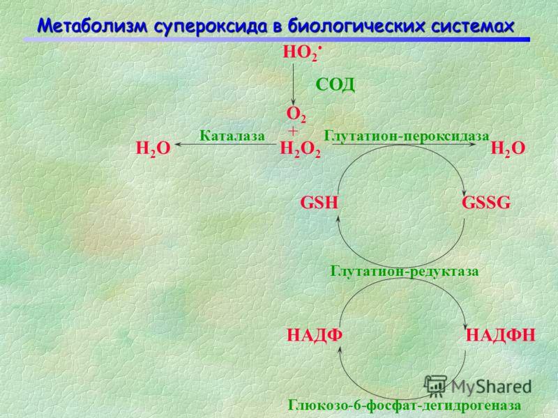 O-O HO-O HO-OH HO H 2 O (RO-O ) (RO-OH) (RO) Процесс последовательного одноэлектронного восстановления молекулы кислорода: Fe 2+ СОД
