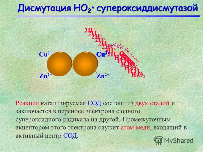 Дисмутация HО 2 супероксиддисмутазой Реакция катализируемая СОД состоит из двух стадий и заключается в переносе электрона с одного супероксидного радикала на другой. Промежуточным акцептором этого электрона служит атом меди, входящий в активный центр