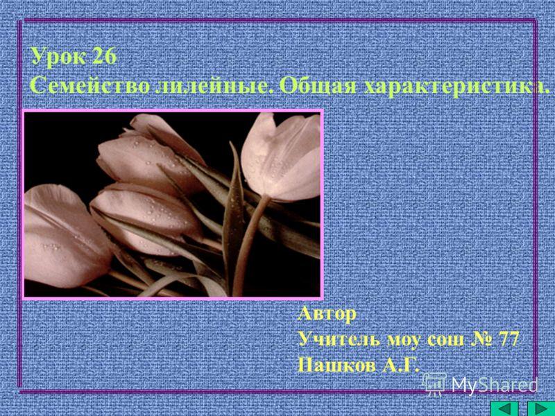 Урок 26 Семейство лилейные. Общая характеристика. Автор Учитель моу сош 77 Пашков А.Г.