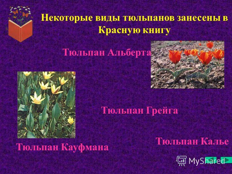 Некоторые виды тюльпанов занесены в Красную книгу Тюльпан Грейга Тюльпан Альберта Тюльпан Кауфмана Тюльпан Калье