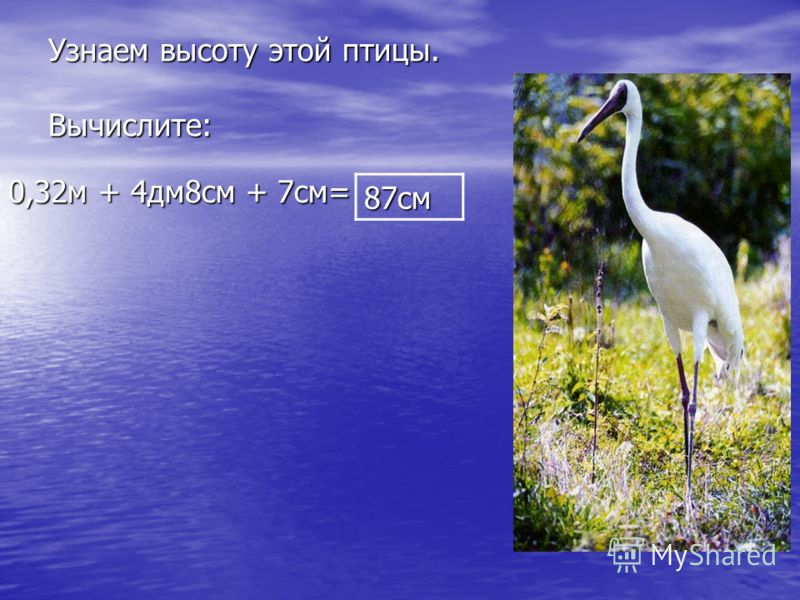 Узнаем высоту этой птицы. Вычислите: 0,32м + 4дм8см + 7см= 87см