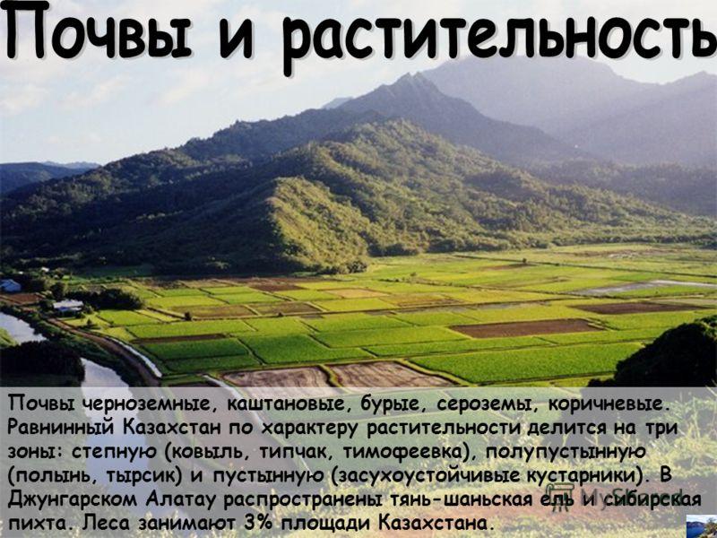 Почвы черноземные, каштановые, бурые, сероземы, коричневые. Равнинный Казахстан по характеру растительности делится на три зоны: степную (ковыль, типчак, тимофеевка), полупустынную (полынь, тырсик) и пустынную (засухоустойчивые кустарники). В Джунгар