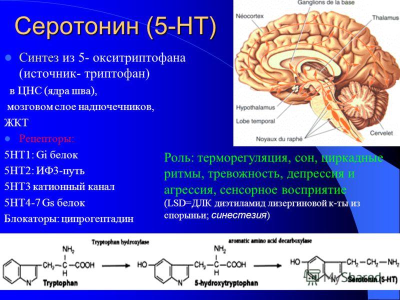 Серотонин (5-НТ) Синтез из 5- окситриптофана (источник- триптофан) в ЦНС (ядра шва), мозговом слое надпочечников, ЖКТ Рецепторы: 5НТ1: Gi белок 5НТ2: ИФ3-путь 5НТ3 катионный канал 5НТ4-7 Gs белок Блокаторы: ципрогептадин Роль: терморегуляция, сон, ци