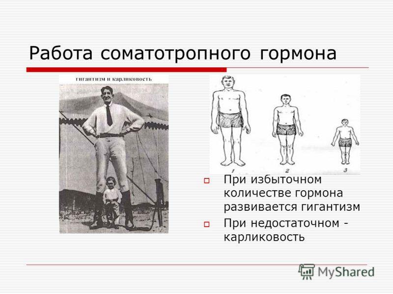 Работа соматотропного гормона При избыточном количестве гормона развивается гигантизм При недостаточном - карликовость