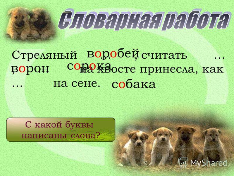 Стреляный …, считать …, … на хвосте принесла, как … на сене. воробей ворон сорока собака Когда так говорят? С какой буквы написаны слова?