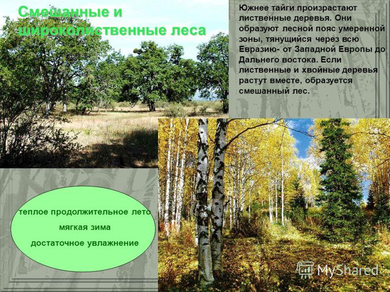 Южнее тайги произрастают лиственные деревья. Они образуют лесной пояс умеренной зоны, тянущийся через всю Евразию- от Западной Европы до Дальнего востока. Если лиственные и хвойные деревья растут вместе, образуется смешанный лес. теплое продолжительн