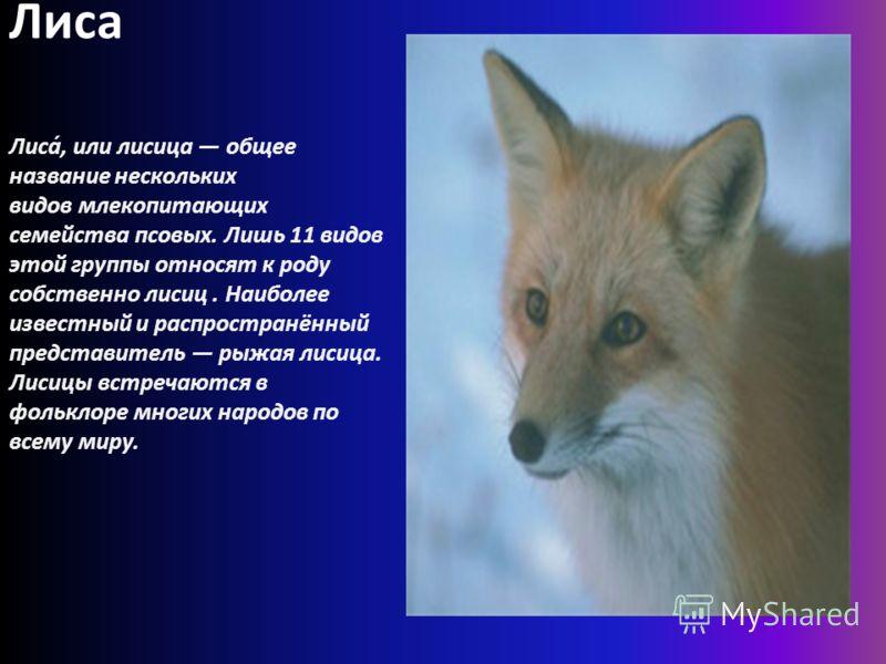 Лиса Лиса́, или лисица общее название нескольких видов млекопитающих семейства псовых. Лишь 11 видов этой группы относят к роду собственно лисиц. Наиболее известный и распространённый представитель рыжая лисица. Лисицы встречаются в фольклоре многих