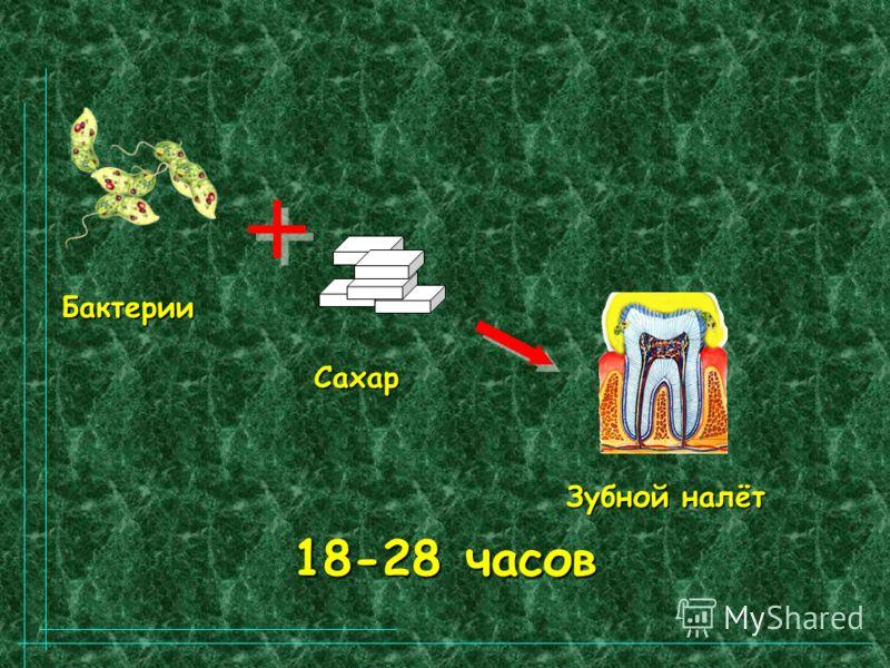 18-28 часов Бактерии Сахар Зубной налёт