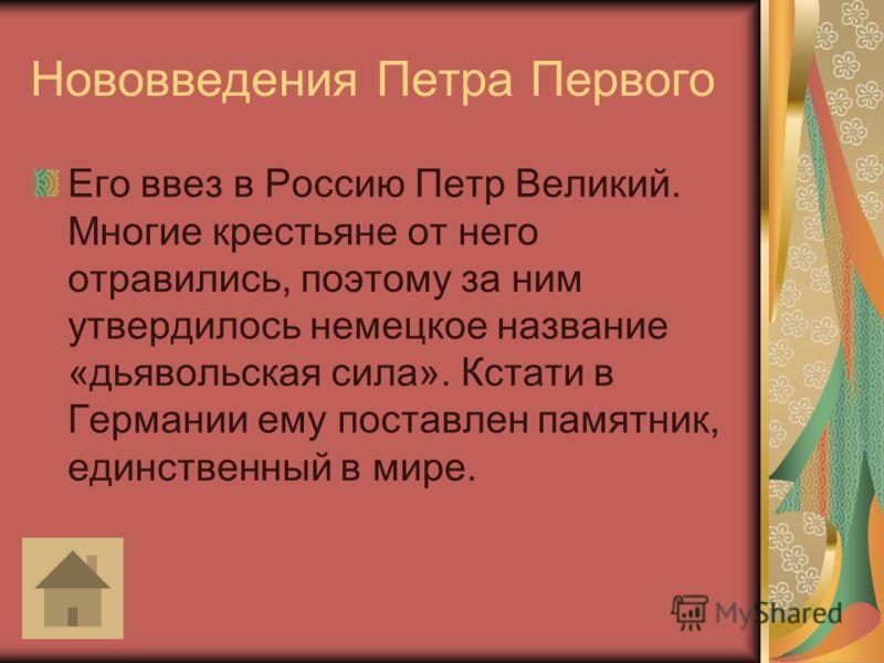 Нововведения Петра Первого Его ввез в Россию Петр Великий. Многие крестьяне от него отравились, поэтому за ним утвердилось немецкое название «дьявольская сила». Кстати в Германии ему поставлен памятник, единственный в мире.