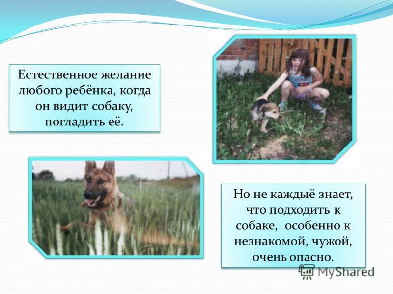 Естественное желание любого ребёнка, когда он видит собаку, погладить её. Но не каждыё знает, что подходить к собаке, особенно к незнакомой, чужой, очень опасно.