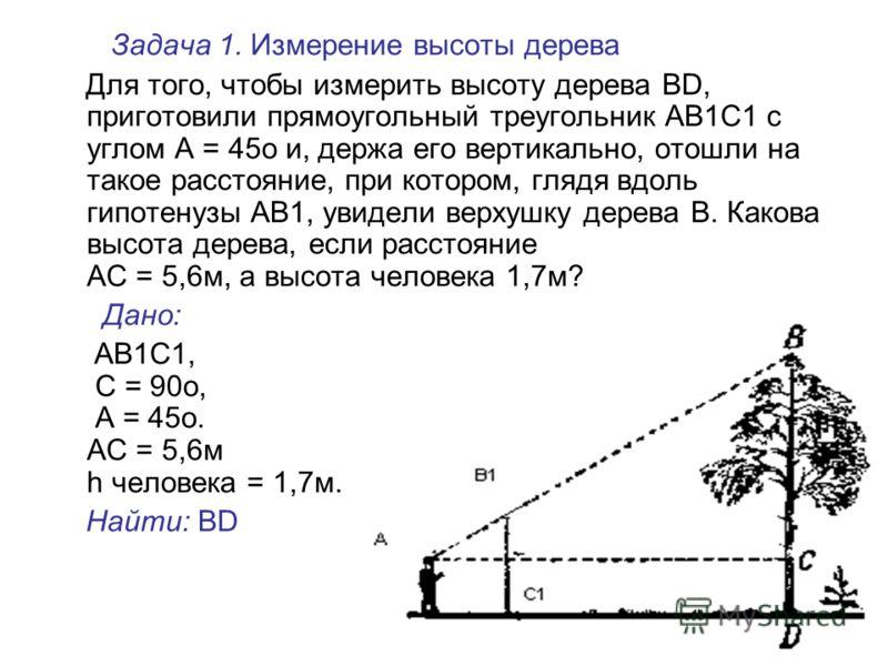 Задача 1. Измерение высоты дерева Для того, чтобы измерить высоту дерева BD, приготовили прямоугольный треугольник АВ1C1 с углом А = 45о и, держа его вертикально, отошли на такое расстояние, при котором, глядя вдоль гипотенузы АВ1, увидели верхушку д