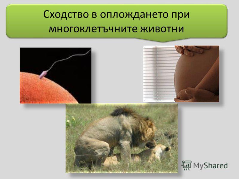 Сходство в оплождането при многоклетъчните животни