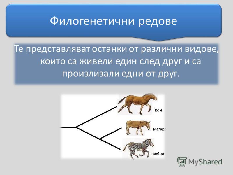 Те представляват останки от различни видове, които са живели един след друг и са произлизали едни от друг. Филогенетични редове