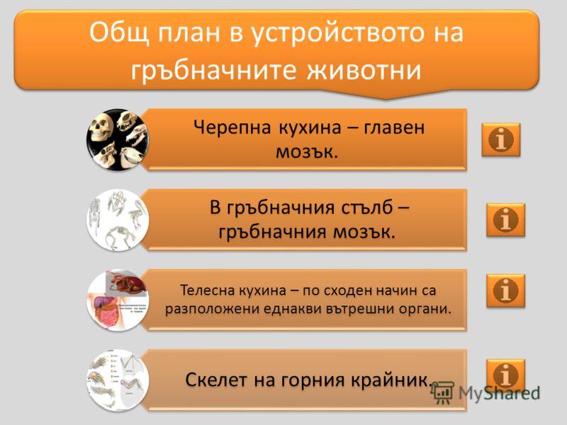 Черепна кухина – главен мозък. В гръбначния стълб – гръбначния мозък. Телесна кухина – по сходен начин са разположени еднакви вътрешни органи. Скелет на горния крайник. Общ план в устройството на гръбначните животни