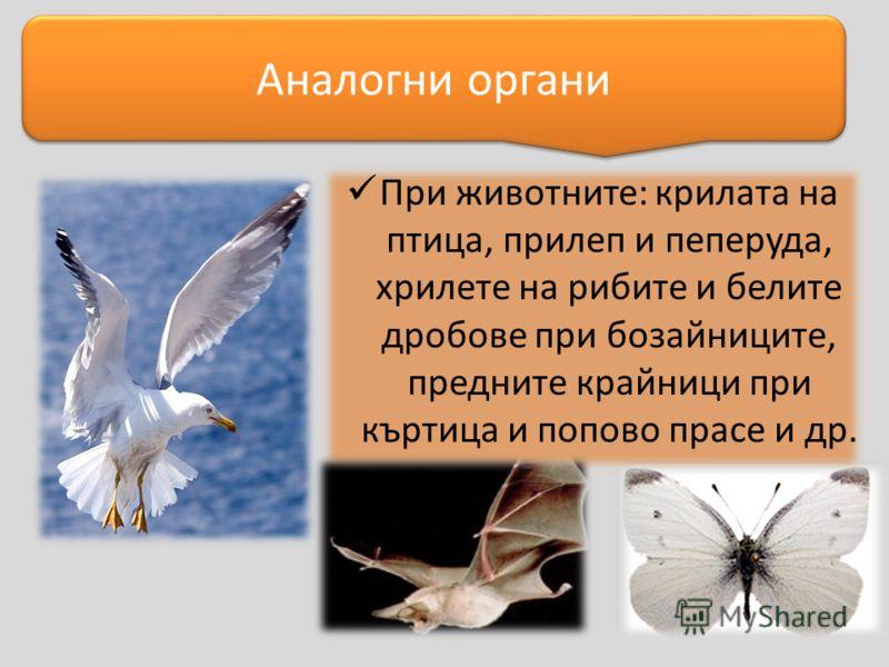 При животните: крилата на птица, прилеп и пеперуда, хрилете на рибите и белите дробове при бозайниците, предните крайници при къртица и попово прасе и др. Аналогни органи