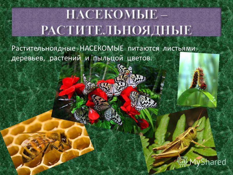 Тело насекомого разделено на три отдела – голову, грудь и брюшко. На голове расположены глаза, ротовой аппарат и пара антенн (усиков), а внутри головной мозг. От груди отходят три пары ног и крылья. А в брюшке некоторых насекомых находится ядовитое ж