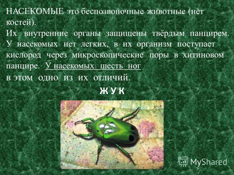 Две трети всех живых существ земли – это Н А С Е К О М Ы Е. Они встречаются повсюду: на суше; в воде; во льдах; в пустыне. На сегодняшний день известно около 1 млн видов насекомых, но истинное их количество может быть 2-5 млн.