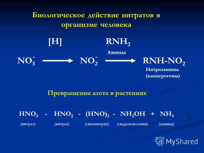 NO 3 [H] NO 2 RNH 2 RNH-NO 2 Амины Нитрозамины (канцерогены) Биологическое действие нитратов в организме человека HNO 3 - HNO 2 - (HNO) 2 - NH 2 OH + NH 3 Превращение азота в растениях (нитрат) (гипонитрит)(гидроксиломин)(аммиак)