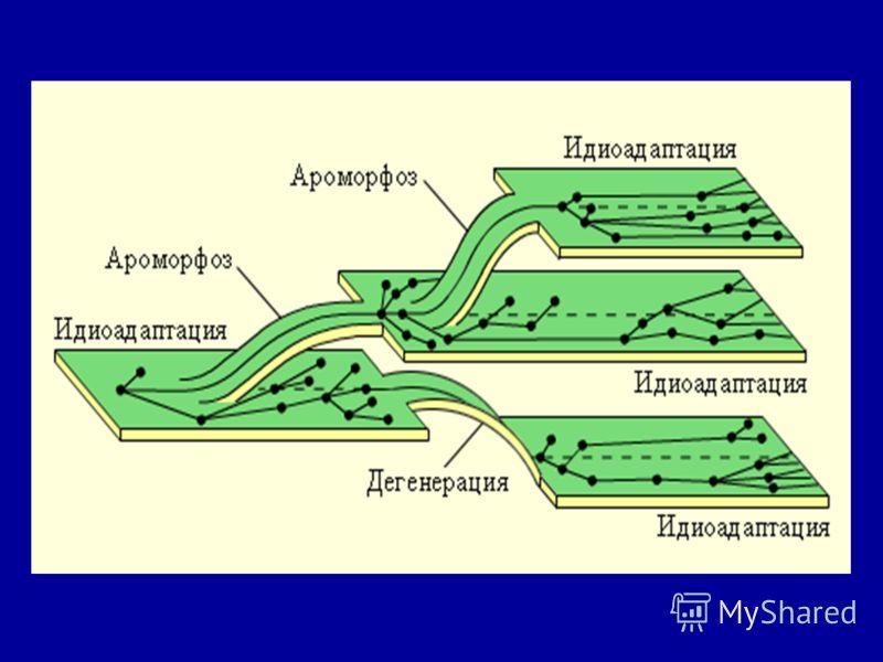 В 1925 г. российский зоолог Алексей Николаевич Северцов (1866-1936) разработал учение о главных направлениях эволюции; В 1934 г. российский биолог Иван Иванович Шмальгаузен (1884-1963) уточнил и дополнил разработанное А. Н. Северцовым учение о главны