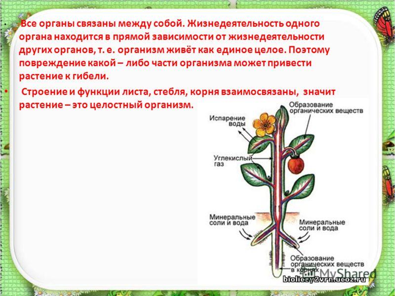 Все органы связаны между собой. Жизнедеятельность одного органа находится в прямой зависимости от жизнедеятельности других органов, т. е. организм живёт как единое целое. Поэтому повреждение какой – либо части организма может привести растение к гибе