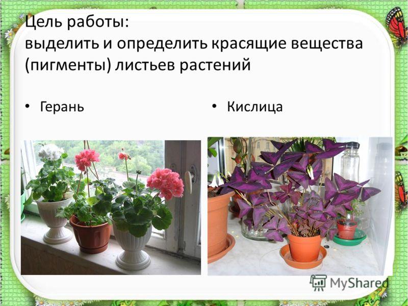 Цель работы: выделить и определить красящие вещества (пигменты) листьев растений Герань Кислица