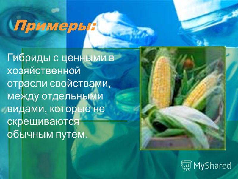 Примеры: Гибриды с ценными в хозяйственной отрасли свойствами, между отдельными видами, которые не скрещиваются обычным путем.