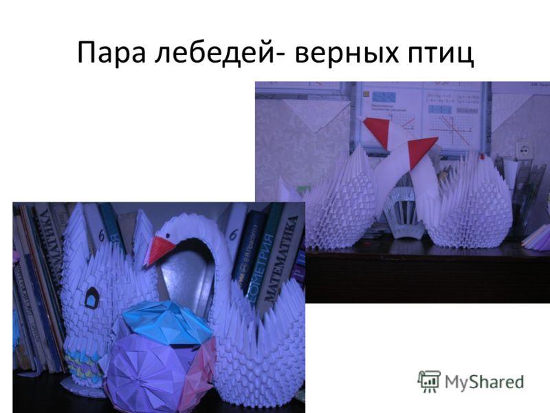 Пара лебедей- верных птиц
