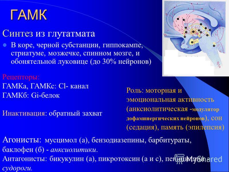 ГАМК Синтез из глутатмата В коpе, черной субстанции, гиппокампе, стриатуме, мозжечке, спинном мозге, и обонятельной луковице (до 30% нейронов) Рецепторы: ГАМКа, ГАМКс: Cl- канал ГАМКб: Gi-белок Роль: моторная и эмоциональная активность (анксиолитичес