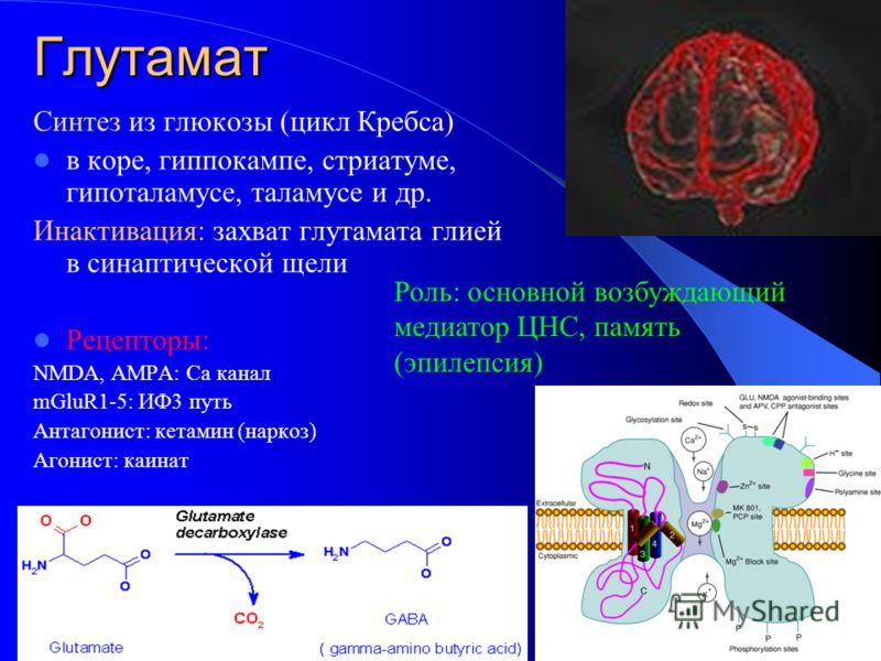 Глутамат Синтез из глюкозы (цикл Кребса) в коре, гиппокампе, стриатуме, гипоталамусе, таламусе и др. Инактивация: захват глутамата глией в синаптической щели Рецепторы: NMDA, AMPA: Са канал mGluR1-5: ИФ3 путь Антагонист: кетамин (наркоз) Агонист: каи