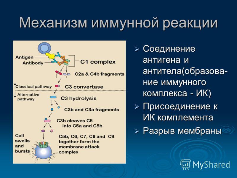 Механизм иммунной реакции Соединение антигена и антитела(образова- ние иммунного комплекса - ИК) Соединение антигена и антитела(образова- ние иммунного комплекса - ИК) Присоединение к ИК комплемента Присоединение к ИК комплемента Разрыв мембраны Разр