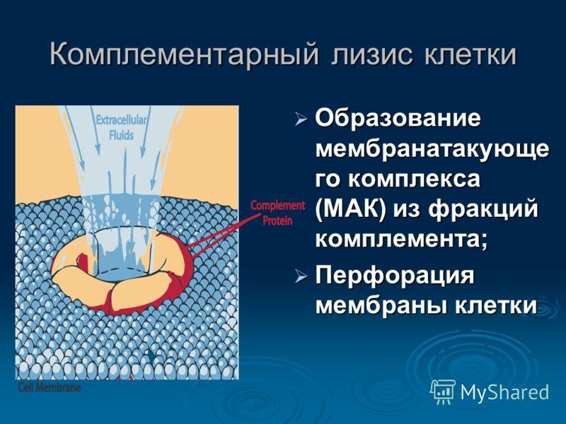 Комплементарный лизис клетки Образование мембранатакующе го комплекса (МАК) из фракций комплемента; Образование мембранатакующе го комплекса (МАК) из фракций комплемента; Перфорация мембраны клетки Перфорация мембраны клетки