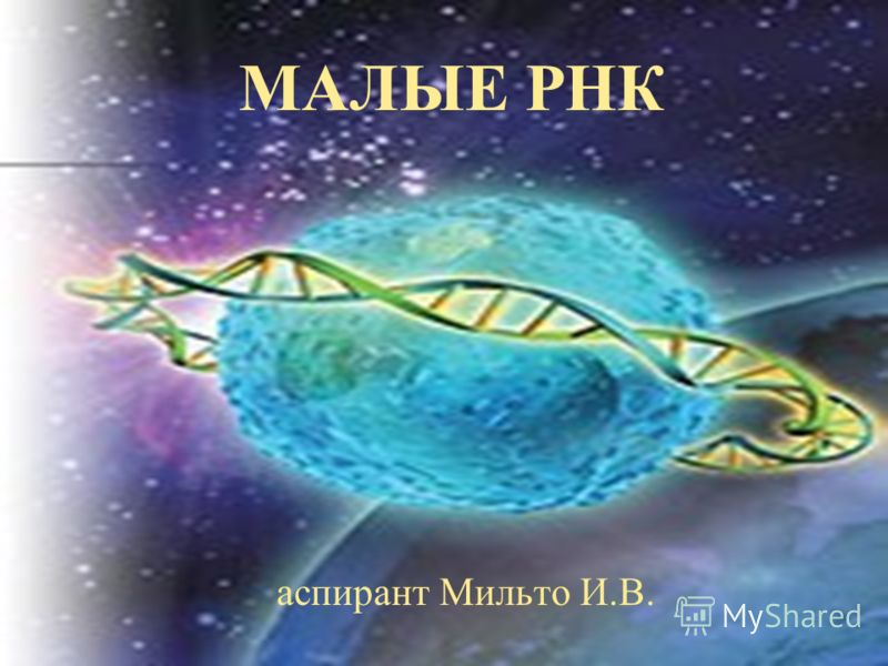 МАЛЫЕ РНК аспирант Мильто И.В.