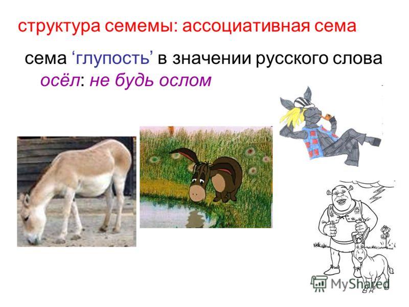 структура семемы: ассоциативная сема сема глупость в значении русского слова осёл: не будь ослом