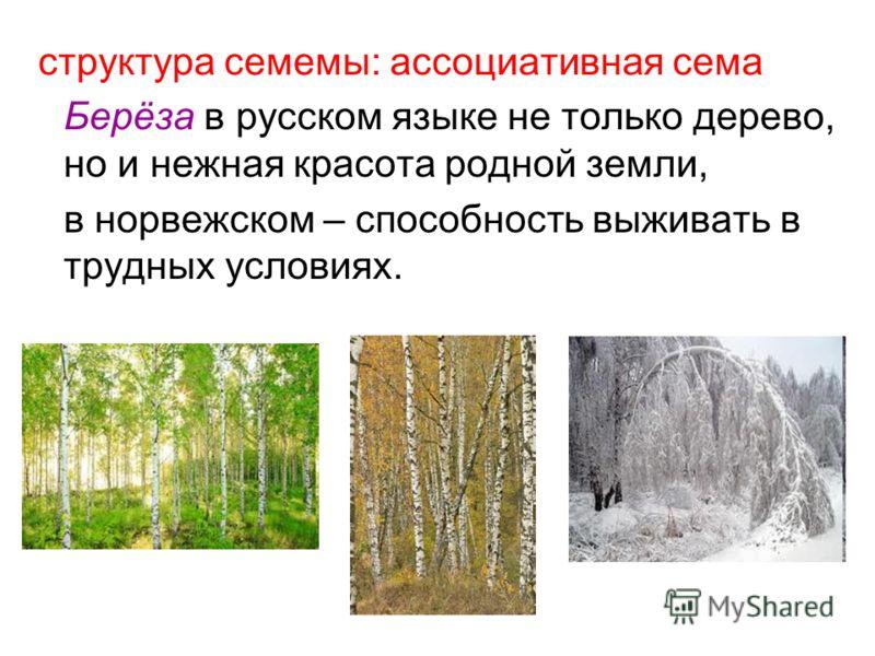 структура семемы: ассоциативная сема Берёза в русском языке не только дерево, но и нежная красота родной земли, в норвежском – способность выживать в трудных условиях.