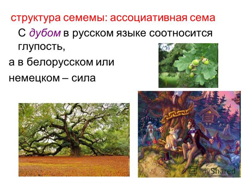 структура семемы: ассоциативная сема С дубом в русском языке соотносится глупость, а в белорусском или немецком – сила