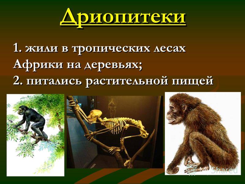 ДриопитекиДриопитеки 1. жили в тропических лесах Африки на деревьях; 2. питались растительной пищей 1. жили в тропических лесах Африки на деревьях; 2. питались растительной пищей